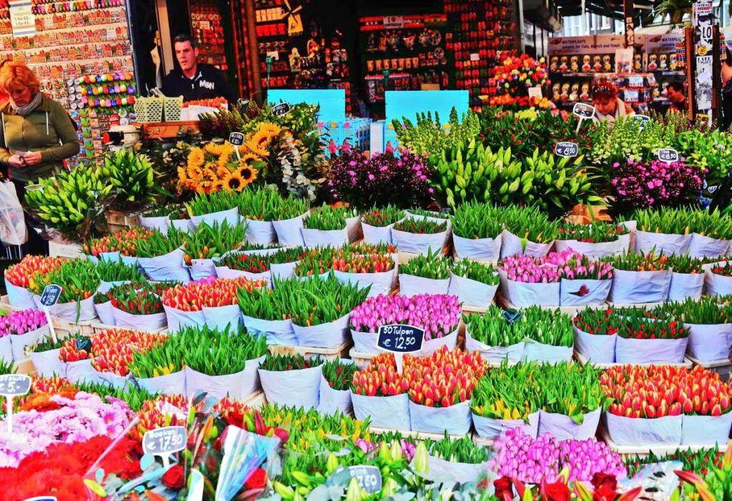 тюльпани в голландії