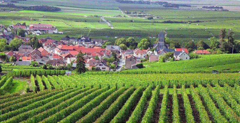 Виноградники Бургундії
