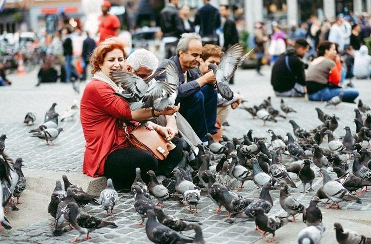 Годувати голубів