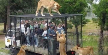незвичайний зоопарк
