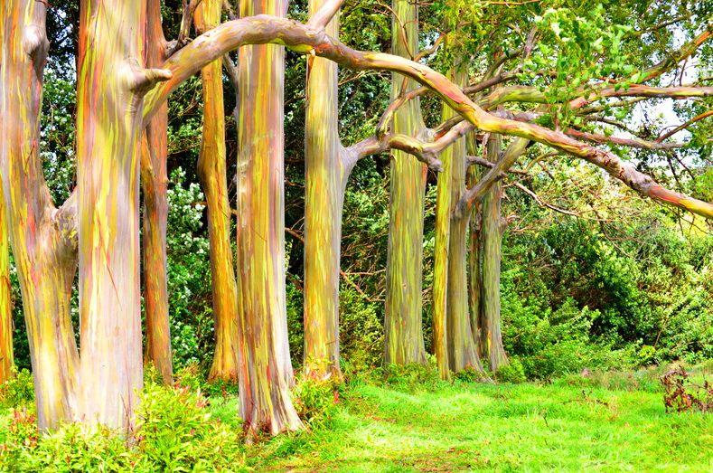 Веселкове дерево
