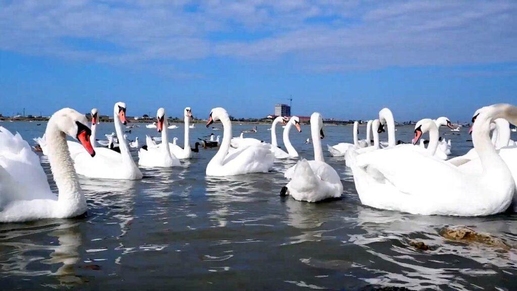 Лебедине озеро