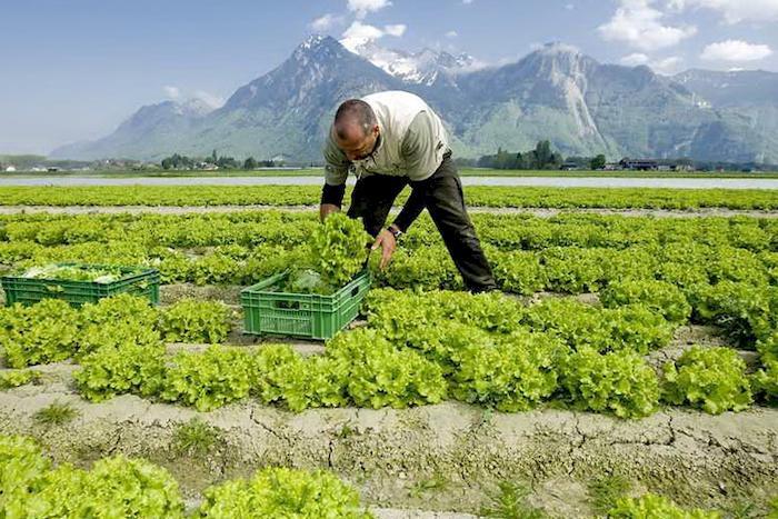 сезонна робота в Швейцарії