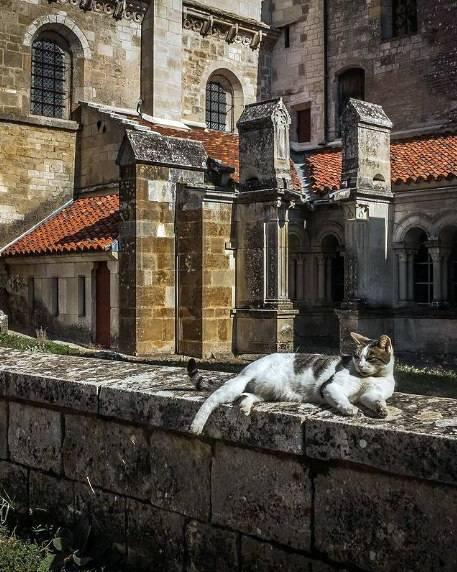7 найбільш котолюбних країн до Дня кота